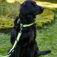 Woofmasta dog lead hi-viz flashing fluorescent yellow